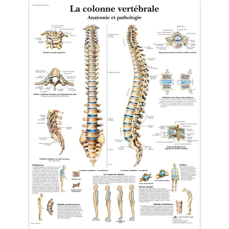 VR2152UU_01_3200_3200_La-colonne-vertebrale-Anatomie-et-pathologie
